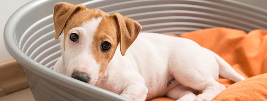 Signs your pet might be inhaling mold